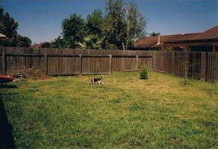 Say Goodbye To Your Boring Backyard Verbena Simple Living