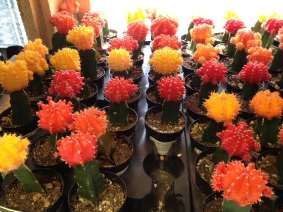 home depot cactus