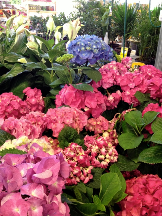 home depot flowers 2
