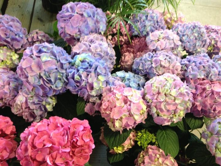 home depot flowers 3