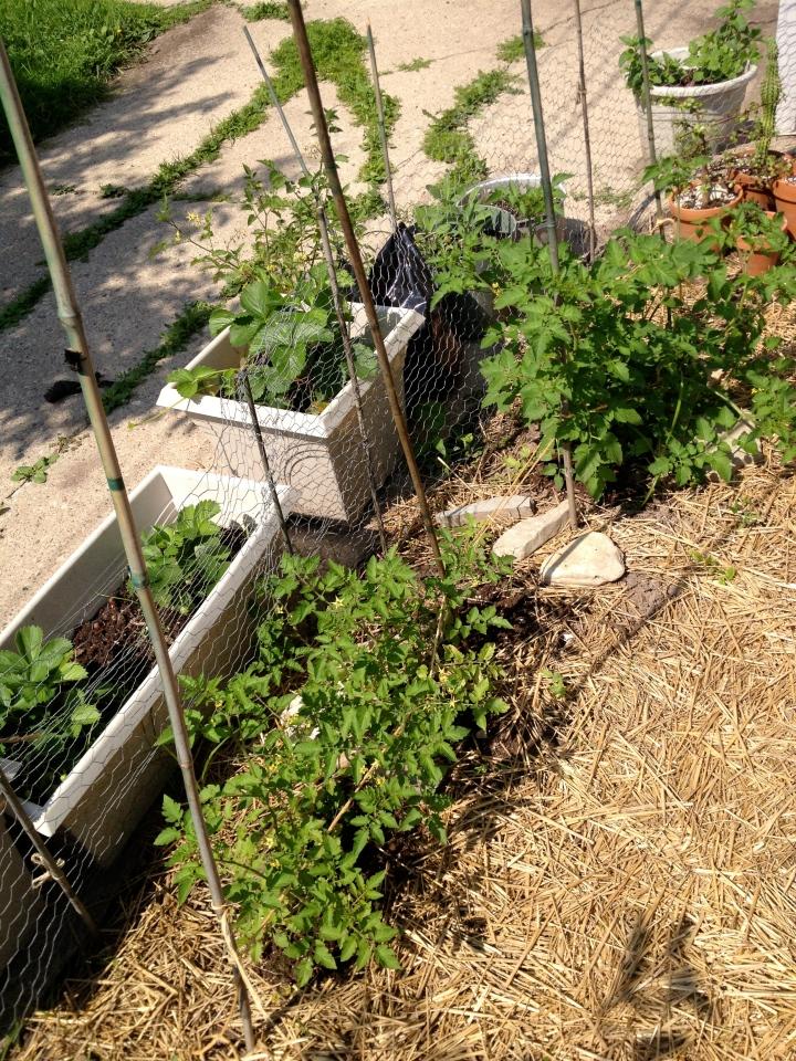 June 30 Garden 2