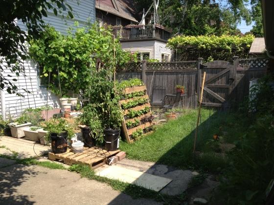 June 30 Garden 7