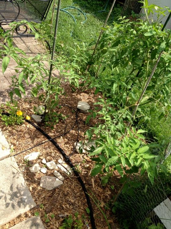 garden part 4-12