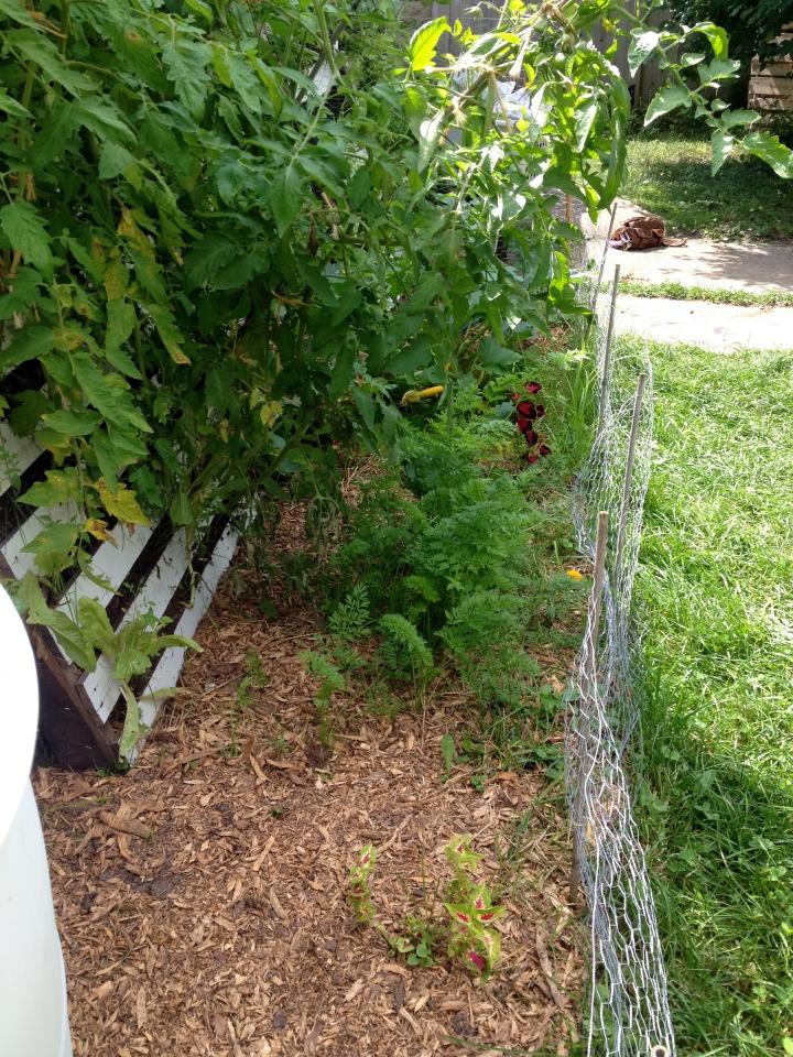 garden part 4-17