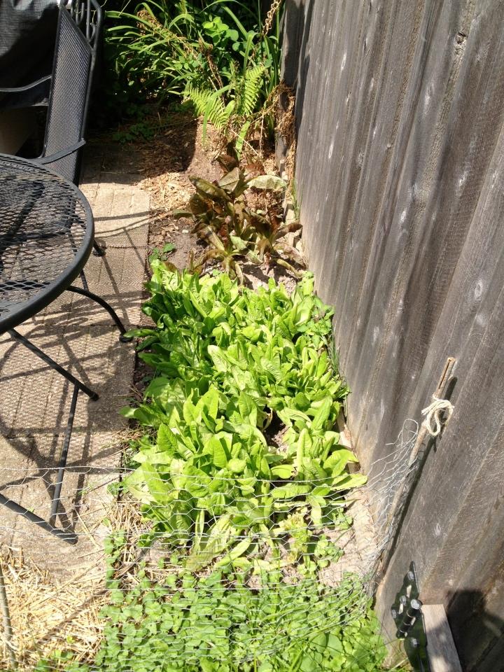 garden part 4-18