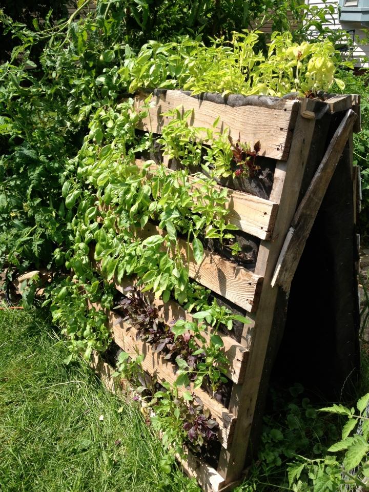 garden part 4-21