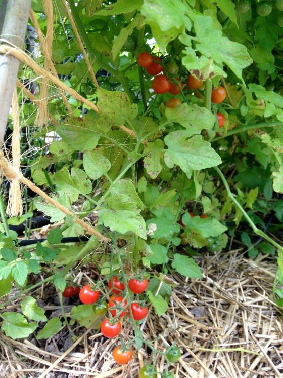garden part 4-4