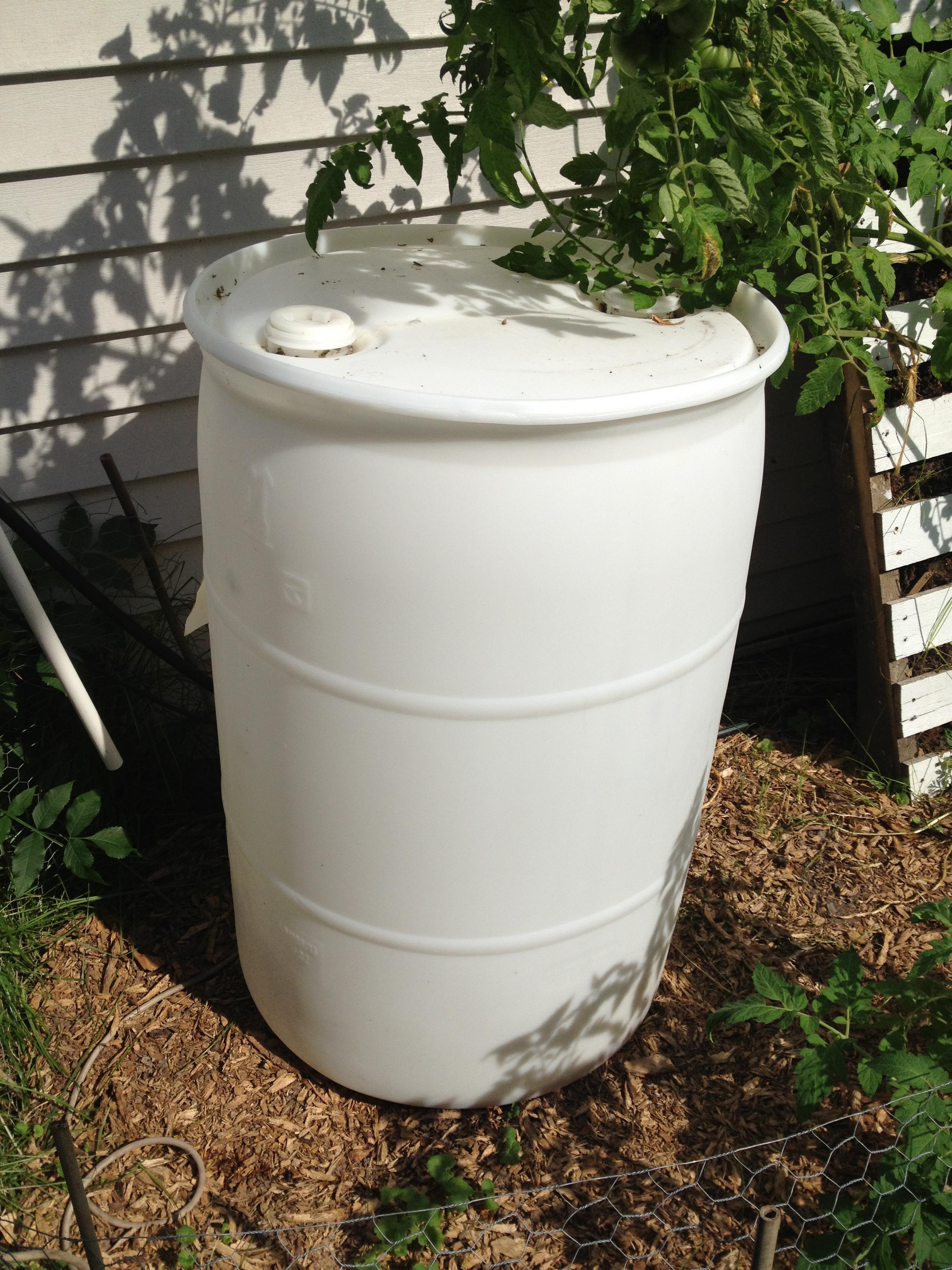 Diy rain barrel verbena for Diy small rain barrel